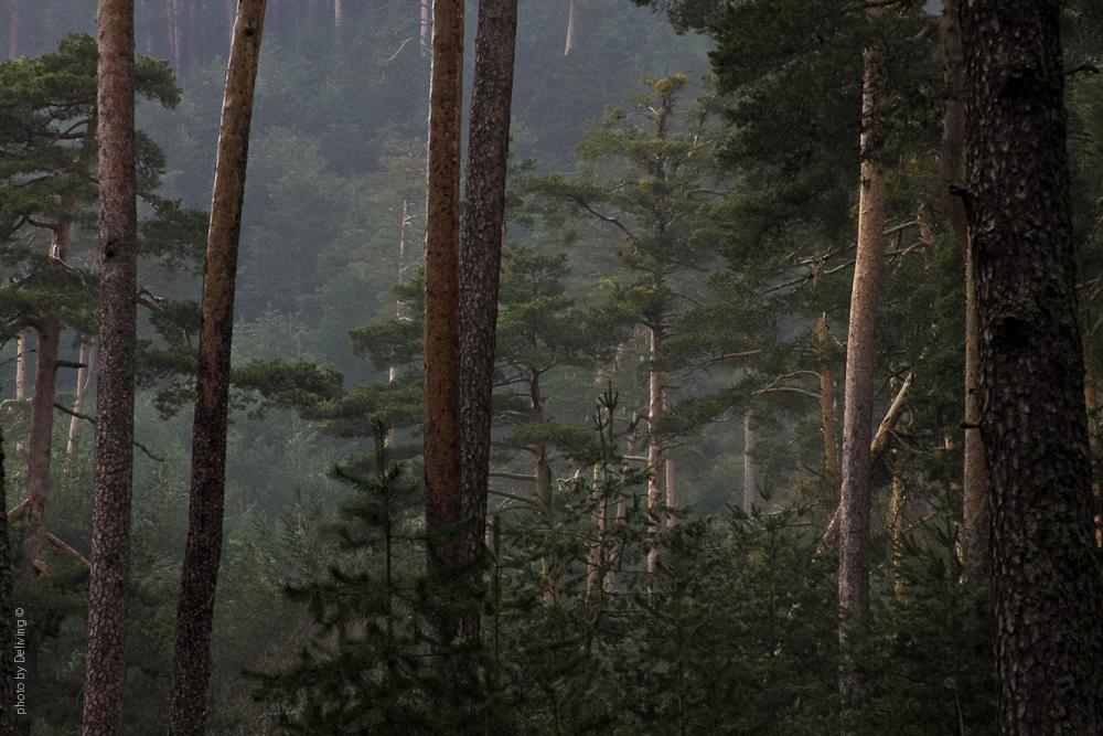el bosque de mi madre